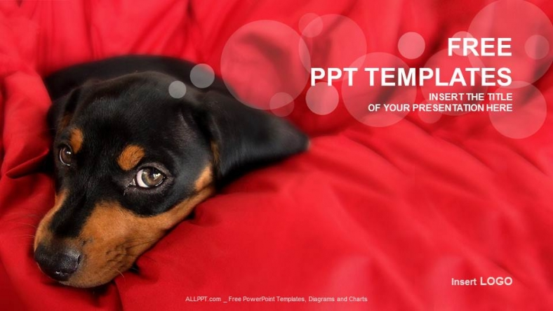 little dog nature ppt templates