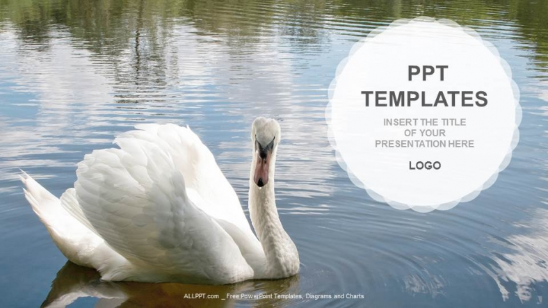 Swan-Nature-PPT-Templates (1)