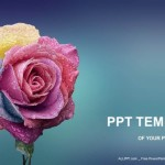 Multi-Colors-Rose-PowerPoint-Templates (1)
