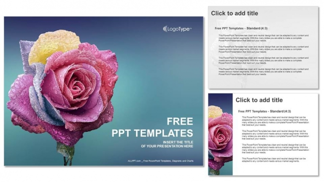Multi-Colors-Rose-PowerPoint-Templates (4)