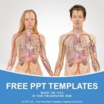 Anterior View of Human Body PowerPoint Templates  (1)