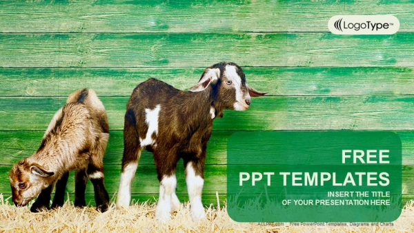little goats powerpoint templates, Modern powerpoint