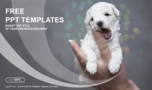 Baby puppy being held in the hand PowerPoint Templates