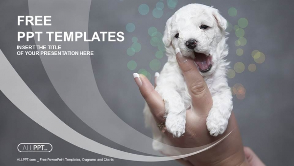 Baby puppy being held in the hand PowerPoint Templates (1)