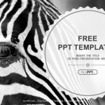 Monochromatic image of a the face of a zebra close up PowerPoint Templates (1)